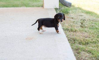 A Hosting Home Pups // Introducing Our New Pup Meet Willie!