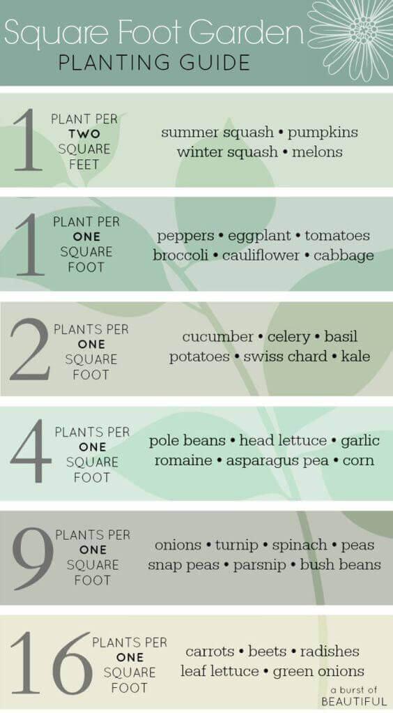 beginner gardening tips / a hosting home blog