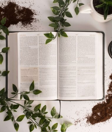 What God is Teaching Me Through My Garden // A Hosting Home Blog
